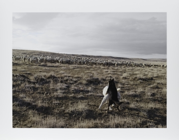Guarding Sheep, Bitter Creek, Wyoming from the series Frontcountry