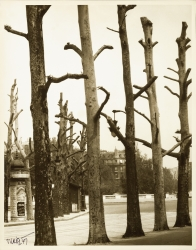 Untitled (5 pruned and leafless trees)