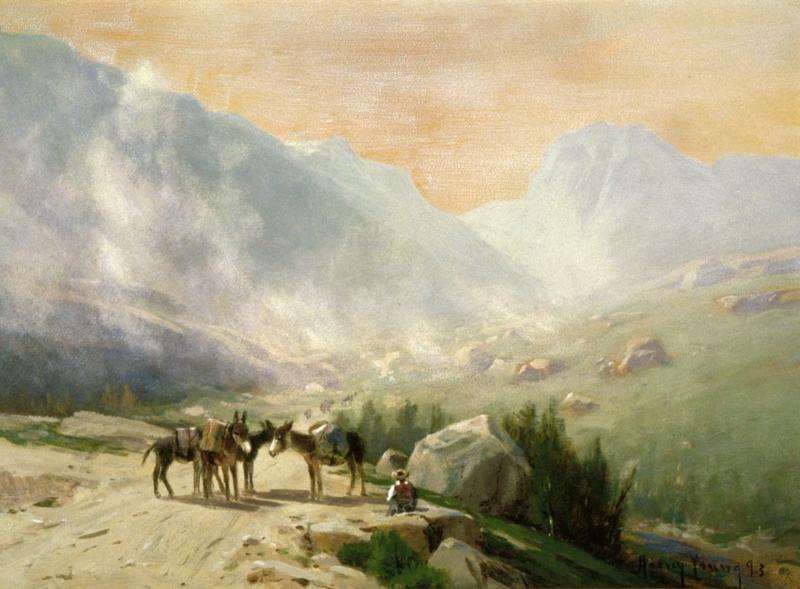 Donkeys Waiting on a Trail