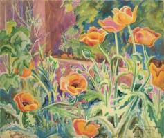 Poppies in Albert Olson's Garden